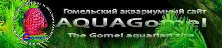 aquagomel.ru