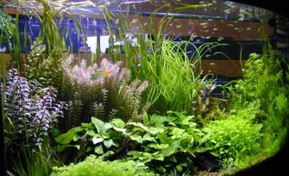 Посадка водных растений