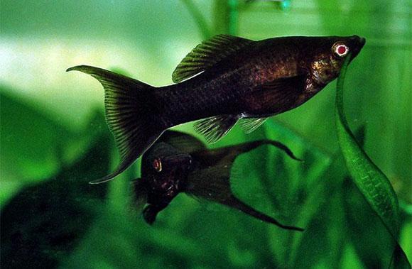 Аквариумные рыбки-с чего начать?