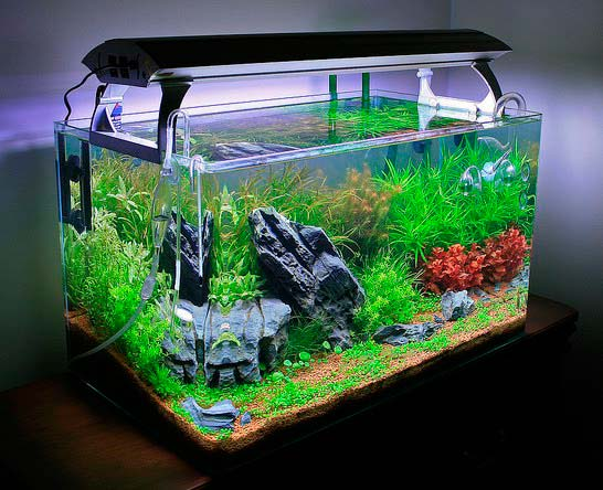 Planted_Aquariums