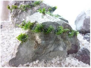Камни Ивакура