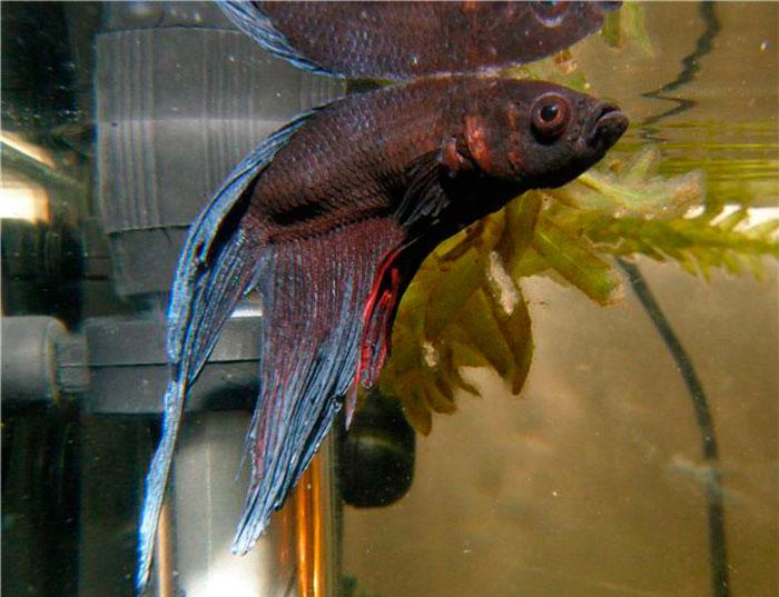 Препарат «Антипар» – как лечить больных рыбок