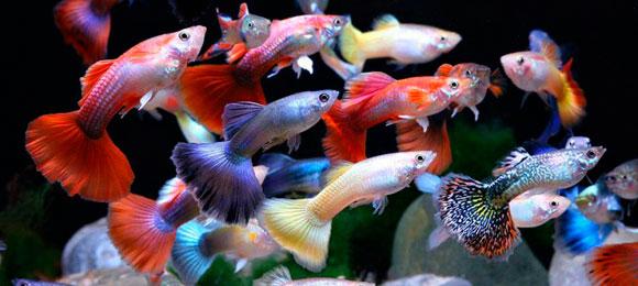 Можно ли покупать выбракованных рыбок