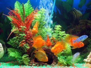 1423409390_aquarium-instruments-2