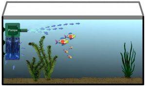 Эффективная фильтрация в аквариуме