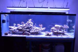 Условия, какие условия необходимы для выращивания растений в аквариуме.