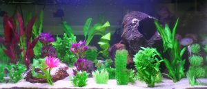Какие декоративные растения можно посадить в аквариуме.