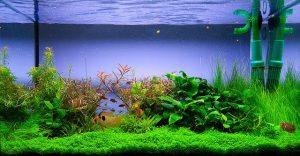 Глобально о воде в аквариуме