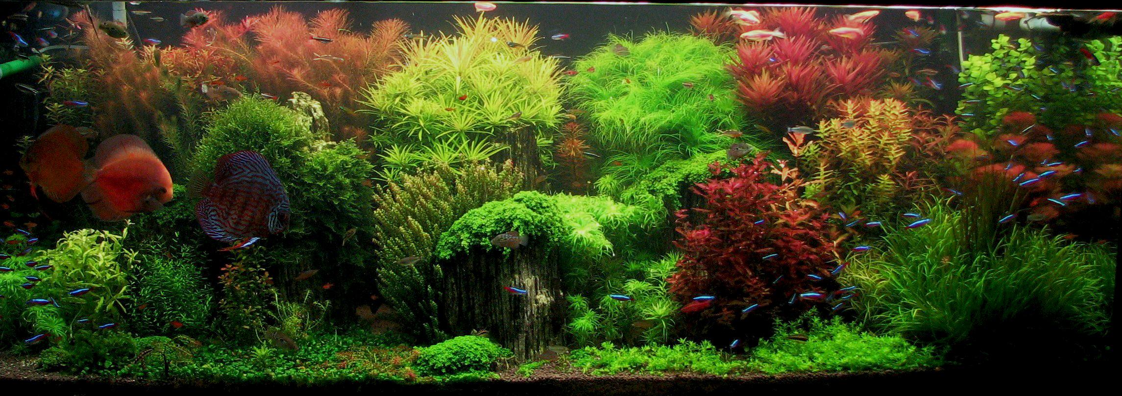 Свет в аквариуме с растениями.